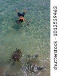 turtle snorkeling in hawaii... | Shutterstock . vector #1012539463