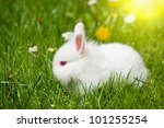 Meadow in Spring With Bunny Rabbit - stock photo