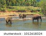 elephant family asia elephants... | Shutterstock . vector #1012618324