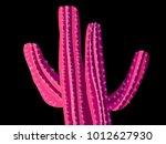 cactus. pink vector cactus.... | Shutterstock .eps vector #1012627930