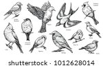 bird species hand drawn set.... | Shutterstock .eps vector #1012628014