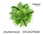 realistic tropical leaves...   Shutterstock .eps vector #1012629268