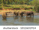 elephants herd attraction river ... | Shutterstock . vector #1012631914