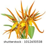 blooming brassada orchid on a... | Shutterstock .eps vector #1012650538