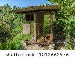 the asian palm civet  paraxorus ...   Shutterstock . vector #1012662976