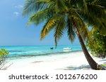 Coconut Palm Trees On Seaside ...
