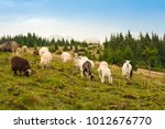 Picture Of Landscape With Herd...