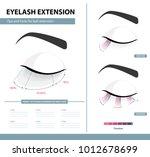 eyelash extension guide.... | Shutterstock .eps vector #1012678699