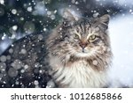 Cat On The Street In The Snow....