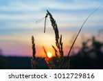 Stock photo grass with dragonfly at background sky and sun at sunset silhouette of dragonfly sitting on tip of 1012729816
