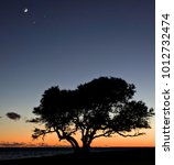 Small photo of Silhouette of a live oak tree at sunset with the moon, Venus and Jupiter above. The Bogue Sound in North Carolina is in the background.