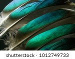 Native American Indian Feather...