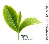 green tea. sprig of tea. vector ... | Shutterstock .eps vector #1012753453