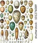 Eggs Of Birds  Turtles  Fish...