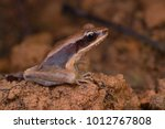 close up image of a northern... | Shutterstock . vector #1012767808