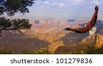 Eagle takes flight over Grand Canyon USA