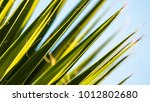 abstract palm leaf background... | Shutterstock . vector #1012802680