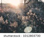 sun peeking through foliage | Shutterstock . vector #1012803730