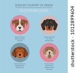 dogs by country of origin.... | Shutterstock .eps vector #1012899604