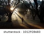 Morning Sun Rays Captured Whil...