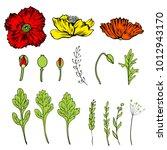 poppy flower  bud  leaves... | Shutterstock .eps vector #1012943170