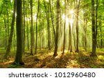 forest of beech trees... | Shutterstock . vector #1012960480