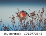 bullfinches on the branch | Shutterstock . vector #1012973848