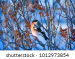 bullfinches on the branch | Shutterstock . vector #1012973854