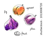 hand drawn ink sketch and... | Shutterstock . vector #1013008720
