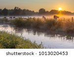 river the dinkel with cows in... | Shutterstock . vector #1013020453