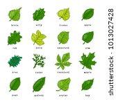 leaf vector green leaves of... | Shutterstock .eps vector #1013027428