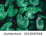 green tropical leaf nature... | Shutterstock . vector #1013040568
