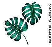 tropical jungle monstera leaves ... | Shutterstock . vector #1013060500