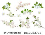 blossoming fruit branch... | Shutterstock . vector #1013083738