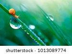 beautiful large drop of water... | Shutterstock . vector #1013089774