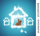 Small photo of sad little english bulldog puppy begging to be adopted, sitting inside of a house shaped cloud, dog adoption concept