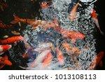 koi fish hawaii | Shutterstock . vector #1013108113