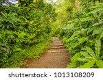 manoa falls trail hike oahu... | Shutterstock . vector #1013108209