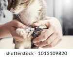 Stock photo cat claw care hands scissors claws cat doctor shearing cat s claws close up 1013109820