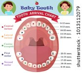 tooth  arrival chart... | Shutterstock .eps vector #1013112079