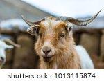 Wildlife  Ladakh  India.