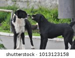 Small photo of Danger in the city. Two aggressive dogs fighting on street