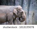 female friendly endangered... | Shutterstock . vector #1013155078