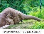 male friendly endangered borneo ... | Shutterstock . vector #1013156014