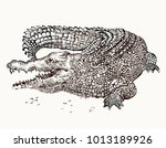 beautiful crocodile graphic | Shutterstock .eps vector #1013189926