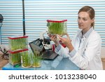 scientist with green plant in... | Shutterstock . vector #1013238040