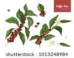 bundle of botanical drawings of ...   Shutterstock .eps vector #1013248984