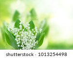 lilly of the valley flowers... | Shutterstock . vector #1013254498