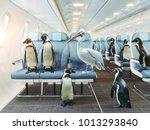 Penguins and pelican  fly in...