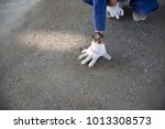 a construction worker check... | Shutterstock . vector #1013308573